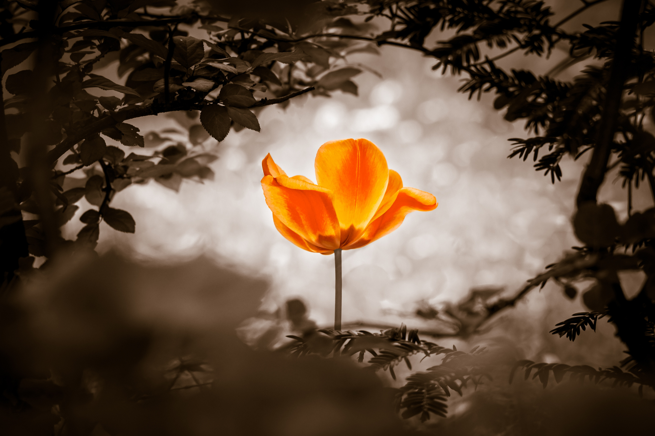 The flower is symbol for power of life and mind strength beyond grief death and sorrows. Also symbolizes healing of stress or burnout.